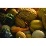 fall foods squash